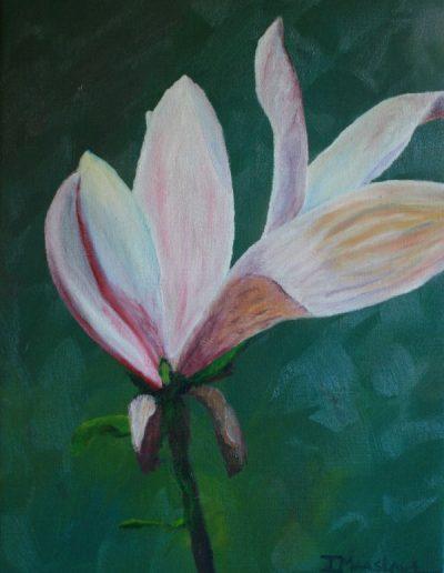 Magnolia last days